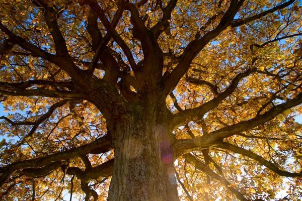 Herbst_DSC6034-by-Mekido
